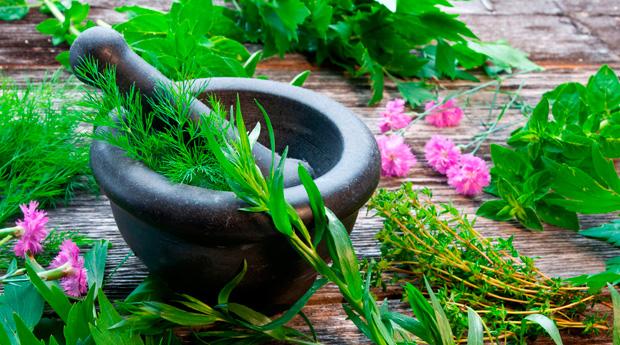 травы для понижения холестерина низкой плотности
